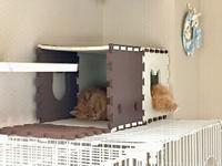 猫の日 - 徒然なるままに