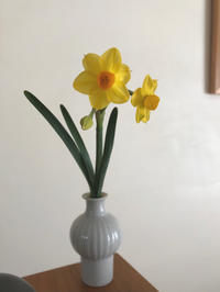 水仙を花瓶に活ける - 自然を見つめて自分と向き合う心の花