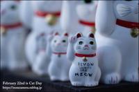 2月22日は「猫の日」 - すずちゃんのカメラ!かめら!camera!