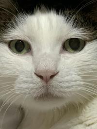 猫の日 - 好食好日