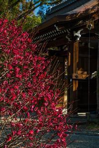 上御霊神社~梅 - 鏡花水月
