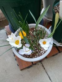 足元から明るい春とたいせつなねこ - 本に育てられ、ねこに尽くす日々