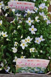 花苗入荷情報【'210222】 - 花と暮らす店 木花 Mocca