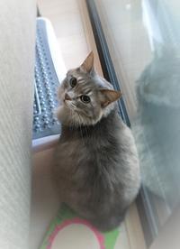 猫ちゃんの日 - なのはペットクリニック 2021年3月24日新規オープン!