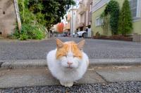 猫の日 - りゅう太のあしあと