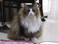 『今日は猫の日なので愛猫ビアンカを・・・・・(=^・^=)』 - 自然風の自然風だより