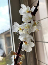 チビっと春 - rin時日報3