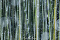 かぐや姫の散歩道 - Digital Photo Diary