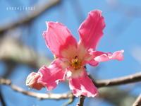 2020.02 沖縄Ⅲ 新都心あたりで - Green Floral