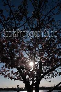 今日の河津桜 - スポーツカメラマン国分智の散歩の途中で