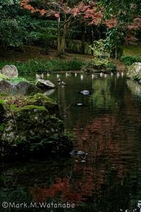 熊本市動植物園-飛び立つ - Mark.M.Watanabeの熊本撮影紀行
