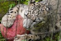 フク通信66ボール遊び - 動物園に嵌り中2