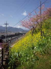 今度は、富士山と桜と菜の花 - 魔王の独り言 の続編