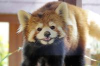 姫路市立動物園と姫路セントラルパークの旅行記を姉妹ブログ「レッサーパンダ紀行」にアップしました - (続)レッサーパンダ紀行