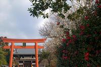 早春の花巡り水仙&椿@梅宮大社 - デジタルな鍛冶屋の写真歩記
