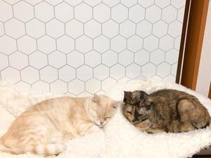日々 - 賃貸ネコ暮らし|賃貸住宅でネコを室内飼いする工夫