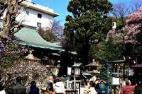 五條神社、花園稲荷神社の梅の花 - お散歩写真     O-edo line