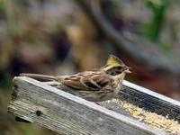 冬鳥も、もうじきか - 今日の鳥さん+α(初心者野鳥写真集)