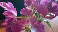 花はイイⅡ - Loveletters
