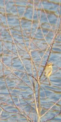 野鳥をスマホで撮影マニュアル特訓 - 虫のひとりごと