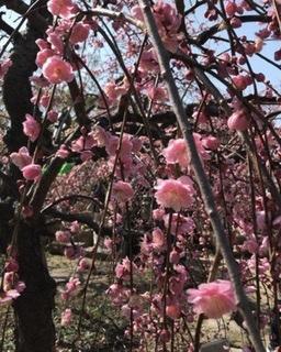 梅の花 - LOHASNA