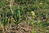 ■春を探しに (2)21.2.23(モンシロチョウ、キタテハ、テングチョウ) - 舞岡公園の自然2