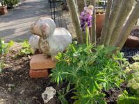 花壇に春のお花を植えてみたよ② - へい まささん の ひとりごと