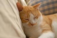 一日遅れの猫の日 - aya's photo