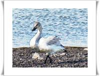 沼で鳥 - あおいそら