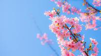 春間近! - 八風農園 雅 鈴鹿連峰の御在所岳の麓で自然食品を製造販売してる農園です!