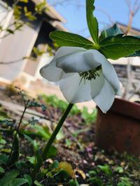捗らない庭掃除 - 自然を見つめて自分と向き合う心の花