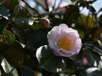 今日の春風景Ⅲ - 風の吹くまま