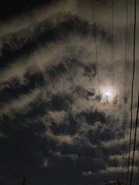 あばら骨?っぽい夜空 - ねこちんの日常