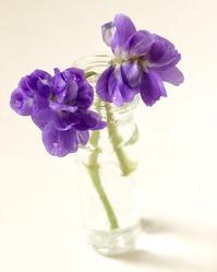 春へ - 花の窓