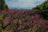 正法寺に咲く冬の花々 - 鏡花水月