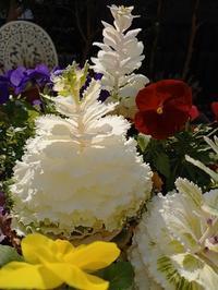 春ホントの春もうすぐ! - hanasdiary.exblog.jp