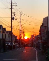 春もうすぐ・・・2月のWEB SHOP更新のお知らせ - Sola*Tsuchi  花とアクセサリー