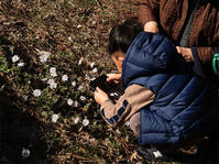 春の妖精 - 清治の花便り
