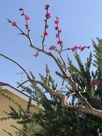 春が来た - サンシュルピス便り