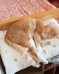 セクシー・チャルさん - 猫と夕焼け