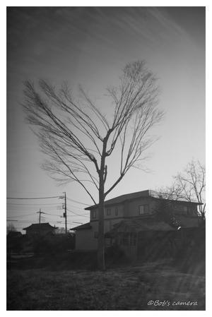 冬の木 - BobのCamera
