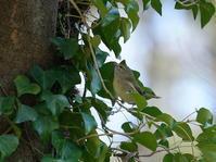 小鳥の集まる木を見つけました!ZMY - シエロの野鳥観察記録