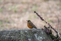 佇み!? - 趣味の野鳥撮影