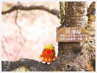 * 河津桜 * - * gonta day's *