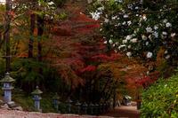 2020紅葉きらめく滋賀紅葉参道(胡宮神社) - 花景色-K.W.C. PhotoBlog