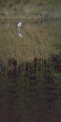 野鳥をスマホで撮影鳥を撮らない - 虫のひとりごと