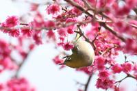 野鳥に呼ばれる - 写真の記憶