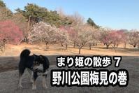 黒柴まりのブログ2月25日編 - 日本あちこち撮り歩記