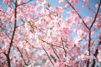 mellow color - aya's photo