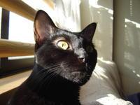 近況報告2月25日 - 香港と黒猫とイズタマアル2